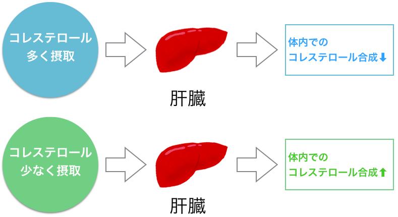 肝臓でのコレステロールのフィードバック機能